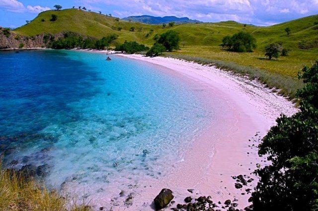 Pink Beach merupakan salah satu objek wisata pulau komodo