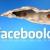 manfaat facebook manfaat memiliki akun facebook